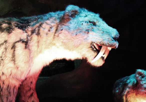 tigre V2 BD